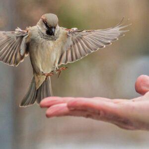 Птицезащита